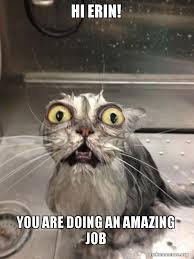 Erin Meme - hi erin you are doing an amazing job cat bath make a meme