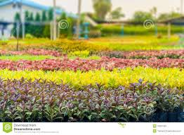 ornamental plant stock photo image of nature green 49001392