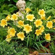 69 best garden images on pinterest landscaping ideas flowers