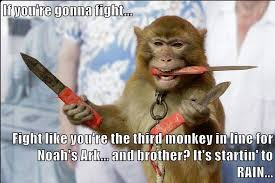 Fight Meme - if you re gonna fight fight like you re the third monkey in
