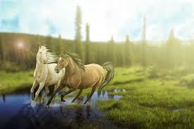 Horse Murals by Wallpaper Hd Mobile Wall Murals Desktop Images Horses Grass