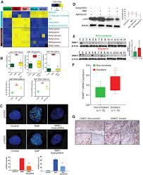 tobacco specific carcinogens induce hypermethylation dna adducts