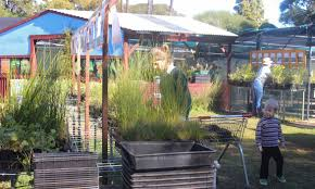 australian native plants perth environmental group setting a pace for native plants in perth