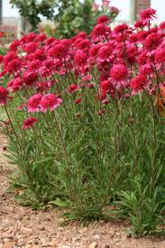 flagstaff native plant and seed best 25 southern landscaping ideas on pinterest fence