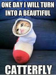 Silly Cat Memes - 101 best cute cat memes that will make your heart melt alley cat