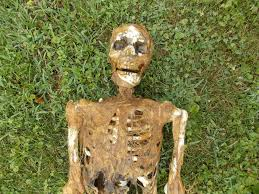 halloween life size decaying rotting skeleton haunted house prop