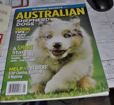 sims 3 australian shepherd cheyenne star miniature and toy australian shepherds home facebook