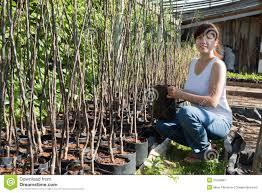 gardener with trees seedlings in pots stock image image 21059681