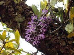 Adaptations Of Tropical Rainforest Plants - tropical rainforest ecodan u0027s blog