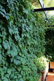garden visit an italian terrace gardenista