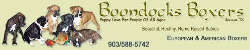 boxer dog european american and european boxers boondocks boxers beautiful healthy