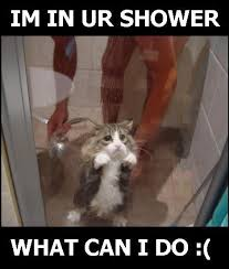 Shower Meme - im in ur shower what cat meme cat planet cat planet