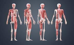 Anatomy Of Human Body Bones 10 Ways To Improve Your Human Anatomy Modelling Creative Bloq