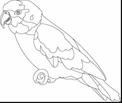 parrot coloring pages fabulous parrot outline coloring page with parrot coloring page