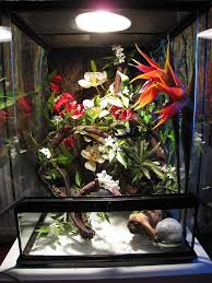 best 25 tree frog terrarium ideas on frog terrarium