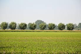 dutch country landscape free stock photo public domain pictures