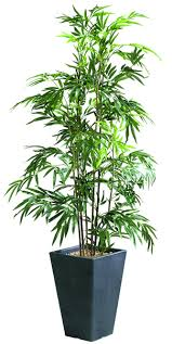 plantes bureau plantes mobilier bureau