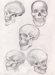 how to draw a skull 50 tutorials in black