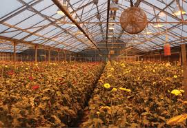 Greenhouse Lights A Bright Future Greenhouse Management