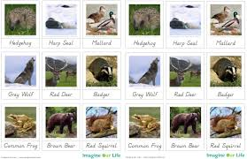 animals of europe for the montessori wall map quietbook with