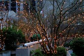 how to put lights on a tree outside stringing outdoor tree lights hubpages