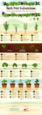 herb growing chart herb gardens 101 a field guide