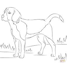 coloring pages dog eliolera com