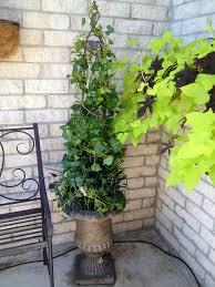 Eugenia Topiary Ivy Topiary I Made For My Garden Garden Decor Pinterest
