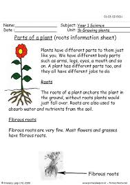primaryleap co uk parts of a plant roots information sheet