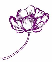 flower sketch by cuzzycutegirl on deviantart