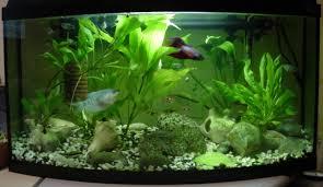 Home Aquarium Decorations Freshwater Fish Tank Ideas