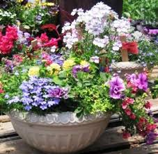 Container Flower Gardening Ideas Container Flower Garden Ideas Photograph Container Gardeni