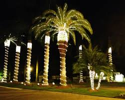 palm tree christmas tree lights inspiring idea christmas lights palm trees light tree on in pictures