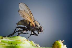 giant house spider pest control plus