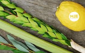 etrog for sale lulav and etrog sale the new york blueprint