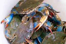 american indians colonists had healthy appetite for crabs study
