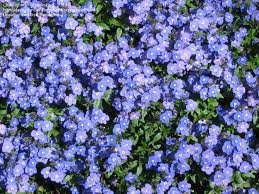 Backyard Ground Cover Options 43 Best Ground Covers Images On Pinterest Ground Covering