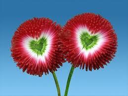 unique flowers unique and flower