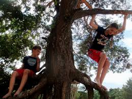 free images tree nature forest flower adventure jump