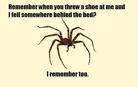 I Tried Killing A Spider - are australian spiders really that big