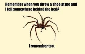 Huge Spider Memes Image Memes - image gallery huge spider meme