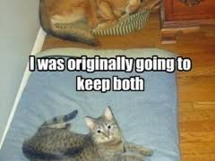 Dog In Bed Meme - dog sleeping in cat bed weknowmemes