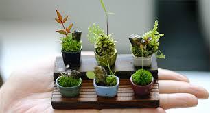 mini plants miniature bonsai trees inhabitat green design innovation