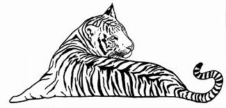 tiger pen drawing at getdrawings com free for personal use tiger