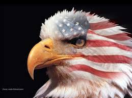 Bald Eagle On Flag American Flag Eagle Related Pinterest American Flag Eagle