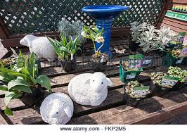 ornamental sheep and plants for sale at garden gift shop at