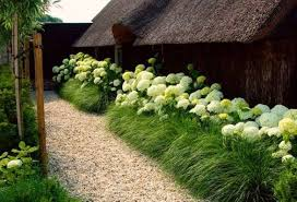 fresh landscaping with ornamental grasses photos 9237