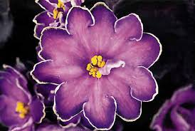 african violet grow light jill