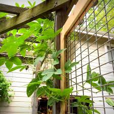 it u0027s not work it u0027s gardening new trellis