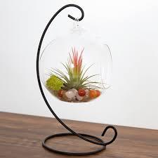 mkono air plant terrarium airplants glass vase succulent